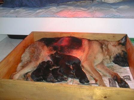 Sala Parto Per Cani : Come ritornare in forma dopo il parto nonostante la stanchezza l